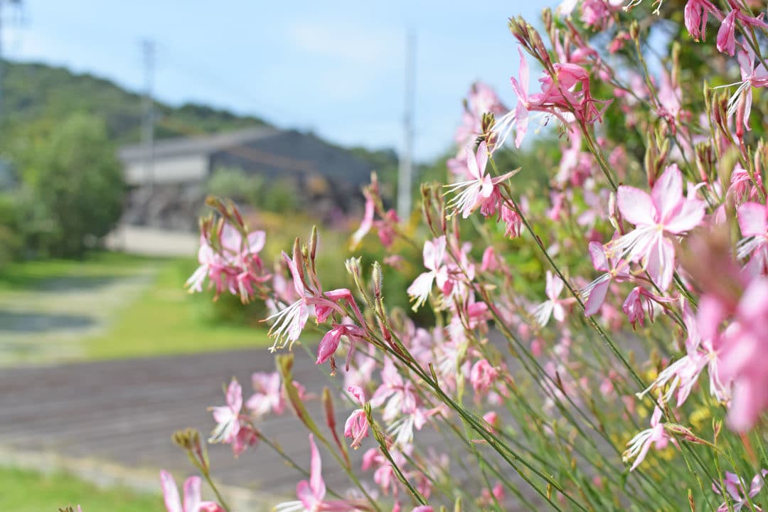 Flowers in Teshima