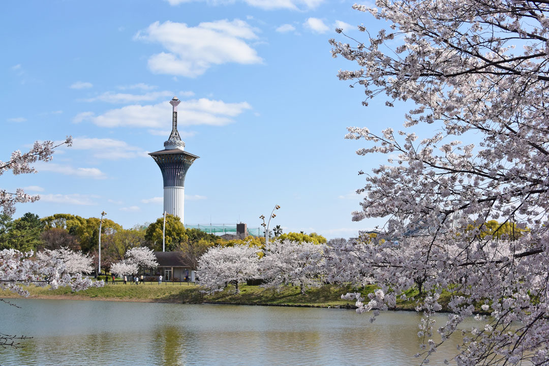 Cherry blossoms and observatory tower