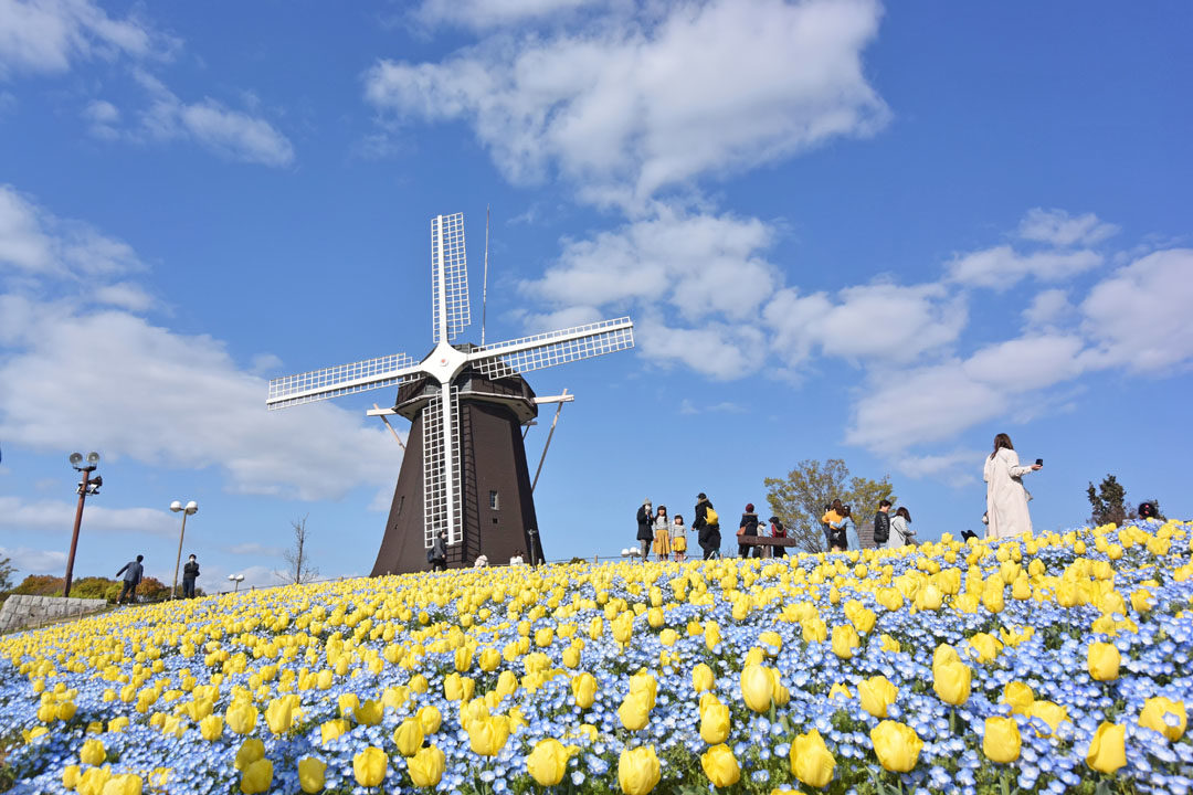 Hill of Windmill in the spring